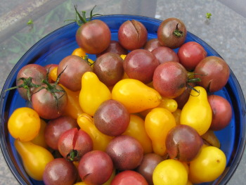 Large bowl of tomatoes